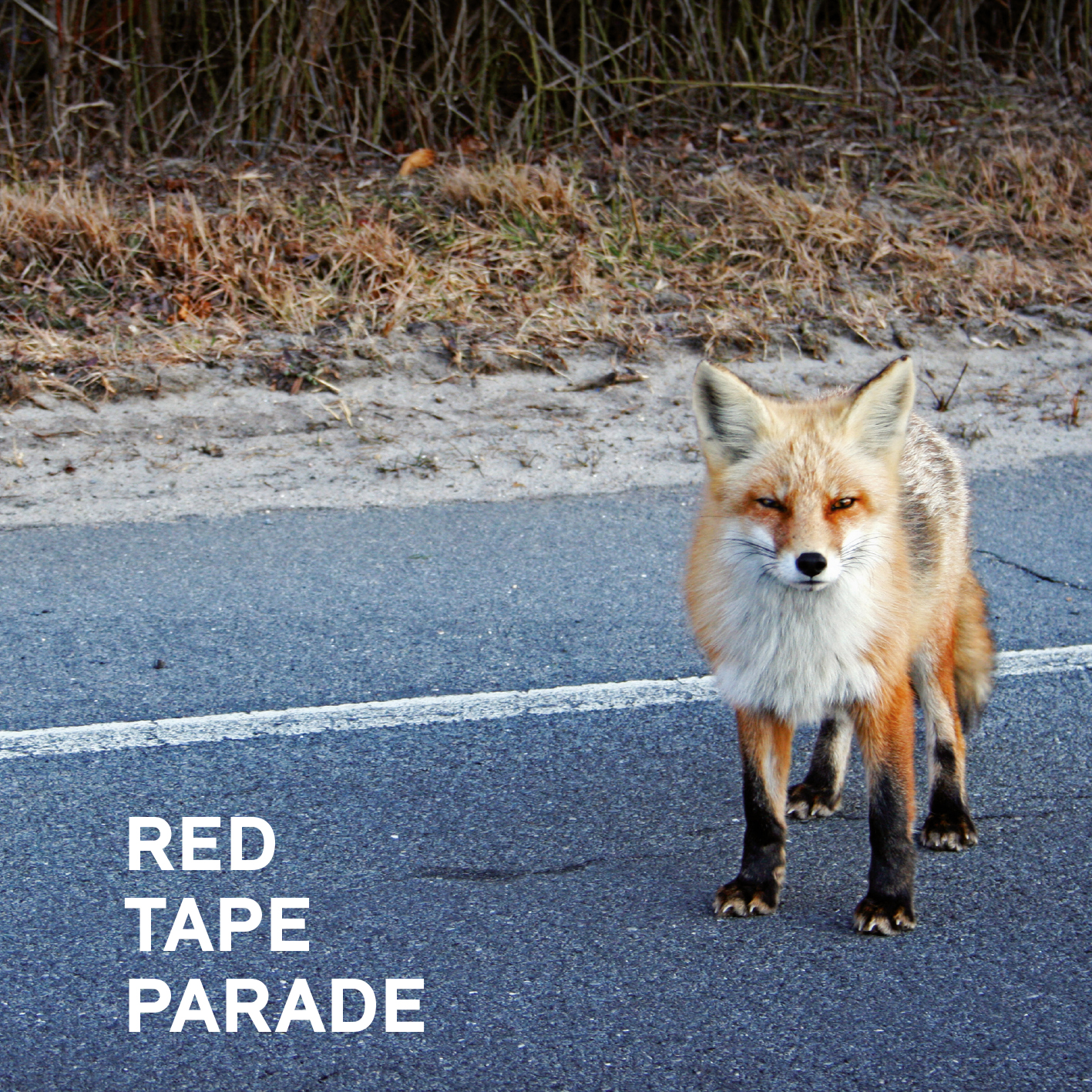 Red Tape Parade
